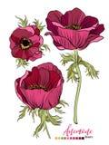 Design för blom- bukett för vektor: trädgårds- röd burgundy Anemony blomma Bröllopvektorn inviterar kortet vektor illustrationer