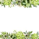 Design för kort för fyrkant för blom- design för vektor Mjuk suckulent, kaktus vektor illustrationer