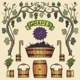 Design för Winemaking för illustrationer för vektorvindruvor Royaltyfria Bilder