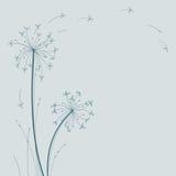 Design floral do dente-de-leão Fotos de Stock Royalty Free