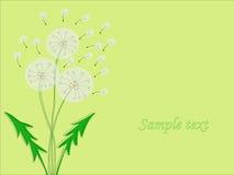 Design of flowers dandelion. Vector illustration. Royalty Free Stock Photo
