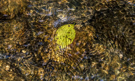 Design formed by ripple, light, leaf and colors in water of a st. A dried  leaf floats under water over pebbles and rocks in the small stream running through Royalty Free Stock Images