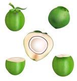 Design för vektor för kokosnöt- och skaftskivakokosnöt Fotografering för Bildbyråer