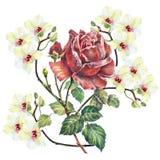 design illustration space 与兰花的红色玫瑰在白色背景 向量例证