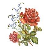 design illustration space 与吊钟花的红色玫瑰在白色背景 库存例证