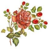 design illustration space 在白色背景的花束小英国兰开斯特家族族徽 库存例证