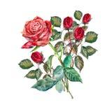 design illustration space 在白色背景的花束英国兰开斯特家族族徽 皇族释放例证