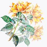design illustration space 在白色背景的花束黄色玫瑰 库存例证
