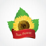 Design labels sunflower oil Royalty Free Stock Photos