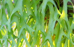 It is design on leaf fern texture Stock Photography