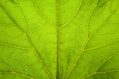 Design on leaf Stock Photo