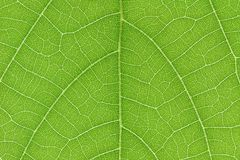 Design on leaf for pattern and background Stock Images