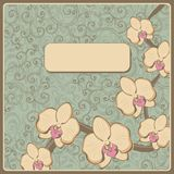 Design with orchid flowers Stock Photo