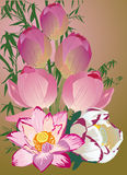 Design with pink lotus bouquet Royalty Free Stock Photos