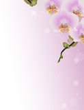 Design with pink orchids in corner Stock Photography