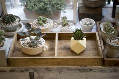 Design plant pot in wooden box. House decoration, small indoor garden concept Stock Images