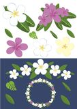 Design with plumeria flowers. Isolated Stock Images