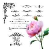 Design rose elements Royalty Free Stock Photo