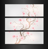 Design Sakura Royalty Free Stock Images