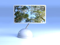 Design Screen - Eucalyptus Trees Stock Photo