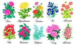Free Design Set Of Rose, Purslane, Iris, Geranium, Tulip, Peony, Gladiolus Stock Images - 177280514