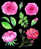 Design set with pink roses on black Royalty Free Stock Image