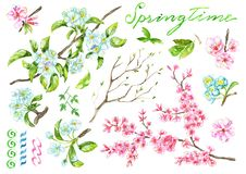 Design Set With Blooming Apple And Cherry Tree Branches, Spring Flowers Royalty Free Stock Photo
