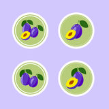 Design Stickers with Ripe Tasty Plum Stock Photography