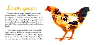 Design template with watercolor hens Stock Image