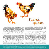 Design template with watercolor hens Royalty Free Stock Photo