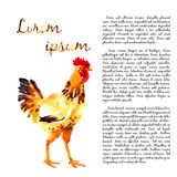 Design template with watercolor hens Royalty Free Stock Photography