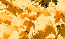 Autumn leaves fluttering down. Stock Images