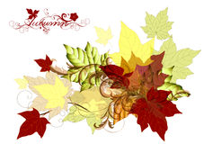 Design with vector autumn maple leafs Royalty Free Stock Images