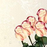 Design with vector beige and pink roses. Cute wedding background with roses  and place for text Stock Photography