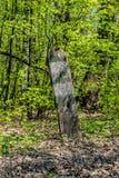 Designação de limites da silvicultura foto de stock
