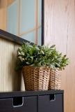 designen planterar lokal Royaltyfria Foton