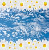 Designer background  from blue sky with clouds and flowers Royalty Free Stock Photography