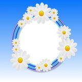 Designer background with the flowers of white color Royalty Free Stock Images