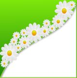 Designer background with the flowers of white color Royalty Free Stock Photos