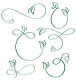 Designer calligraphic elements green leaf icons vegan set on white background Stock Images