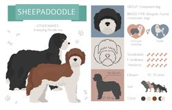 Designer, crossbreed, hybrid mix dogs collection isolated on white. Flat style clipart set. Vector illustration royalty free illustration