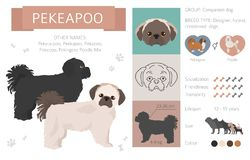 Designer dogs, crossbreed, hybrid mix pooches collection isolated on white. Flat style clipart infographic. Vector illustration stock illustration
