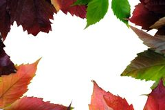 Designer frame of colorful leaves of different trees. Theme autumn. Copy space. Isolated stock images