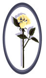 Designer Yellow Rose Stock Photos