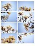 Designkort med frangipaniblommor Fotografering för Bildbyråer