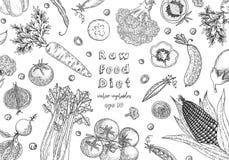 Designmall för organisk mat åkerbruka produktgrönsaker för ny marknad Detaljerad vegetarisk matteckning Lantgårdmarknadsprodukt U royaltyfri illustrationer