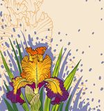 Designs of iris flowers Stock Image