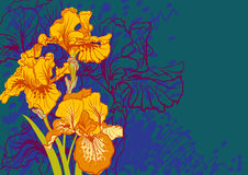 Designs of iris flowers Royalty Free Stock Photography