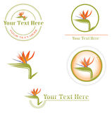 Designs with Strelitzia Stock Photography