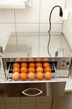 Desinfección de huevos Imagen de archivo libre de regalías